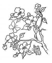 Цветущая яблоня и бабочка Раскраски цветы для детей