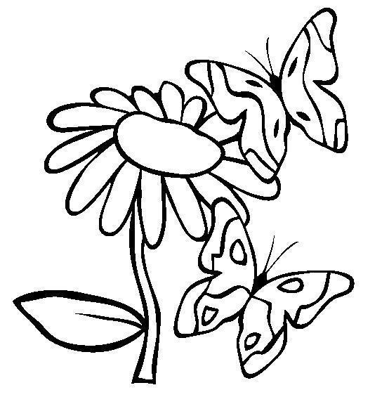 Бабочки на ромашке Раскраски с цветами распечатать бесплатно