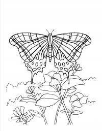 Бабочка над цветами Раскраски цветы для детей