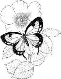 Маленькая бабочка на огромном цветке Раскраски цветы для детей