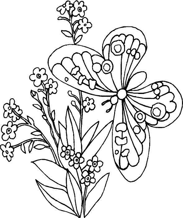 С бабочками Раскраски картинки цветов