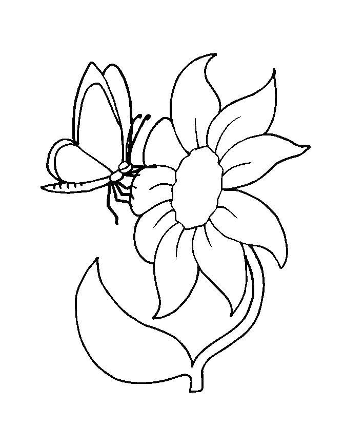 С бабочками Раскраски цветов скачать