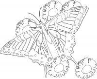 Бабочка летит над цветами Раскраски цветы для детей
