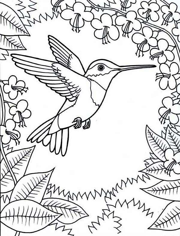 Колибри Новые раскраски цветы