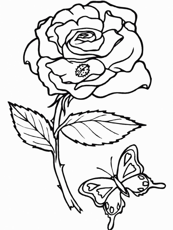 Один цветок Бабочка и роза раскраски цветы