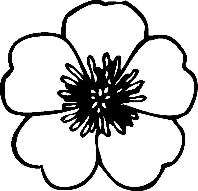 Один цветок Фиалка раскраски цветы