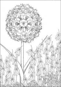 Экзотический цветок Раскраски цветы скачать