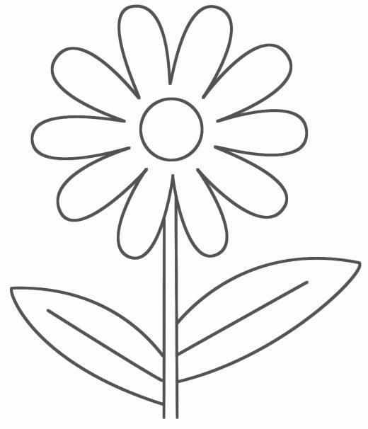 цветы картинки чёрно белые