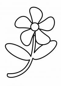 Лепестки цветов, ромашка Фото раскраски цветы