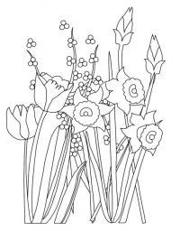 Цветы нарциссы и тюльпаны Раскраски цветы хорошего качества