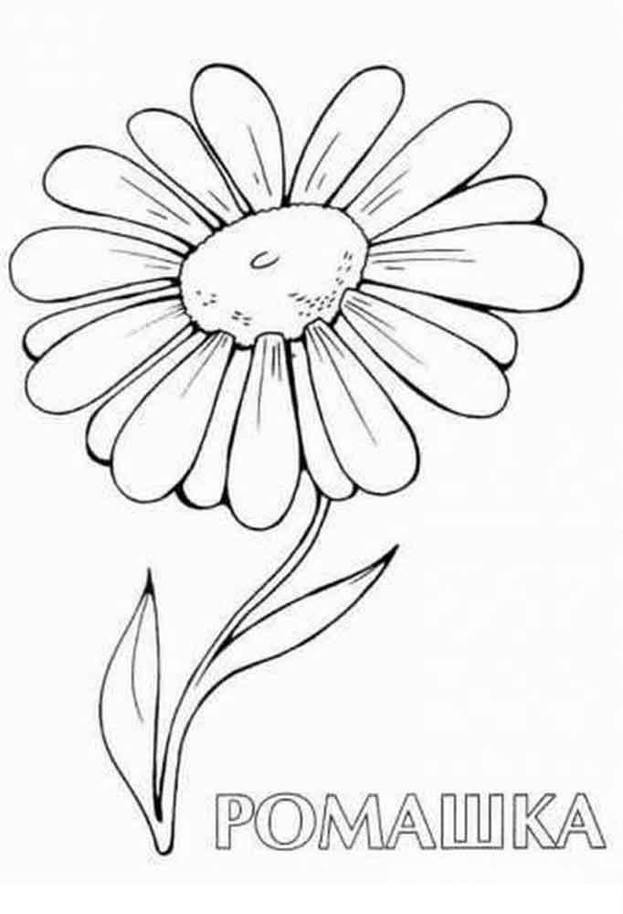Лепестки цветов ромашки