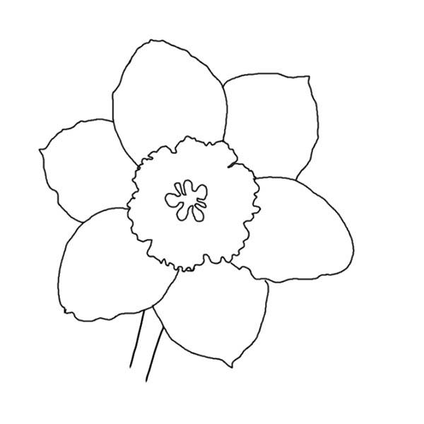 Лепестки цветов нарциссы Раскраски цветы хорошего качества