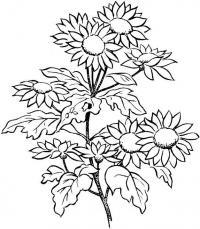 Куст с цветами Раскраски цветы скачать