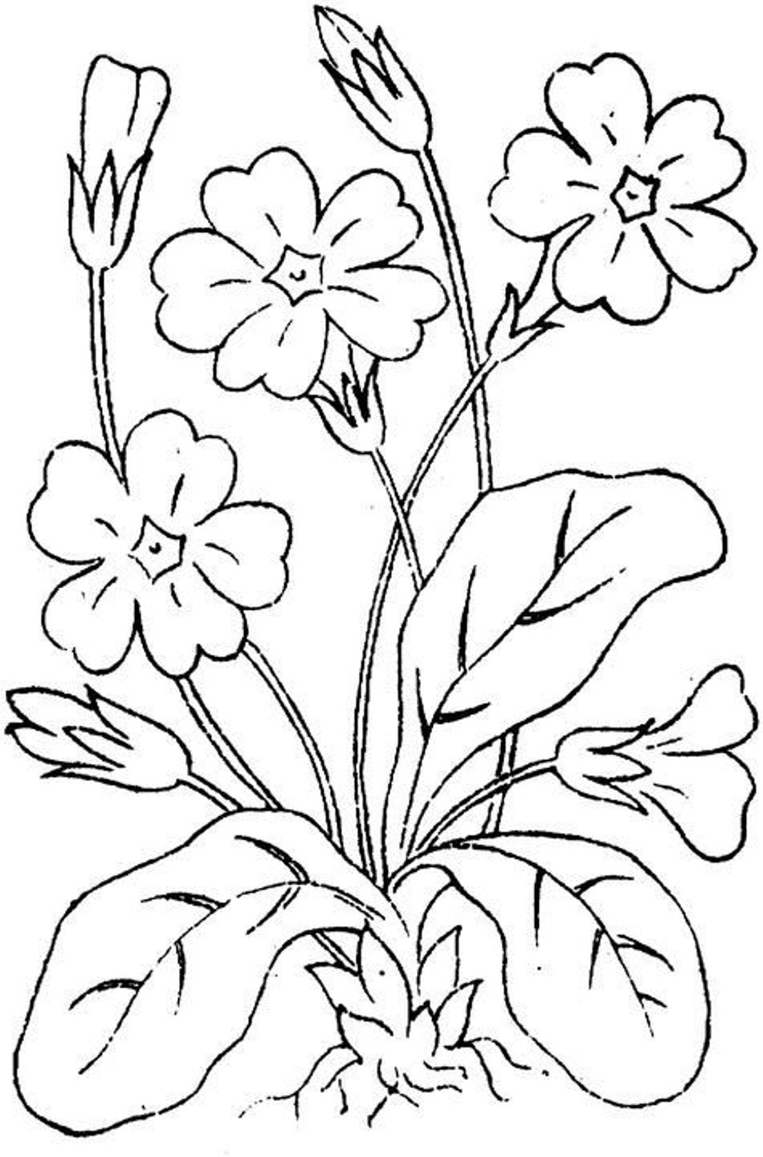 Полевые цветочки цветы раскраски онлайн бесплатно