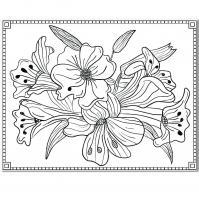 Очень красивые цветы Раскраски цветы скачать