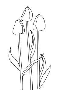 Тюльпанчики Фото раскраски цветы