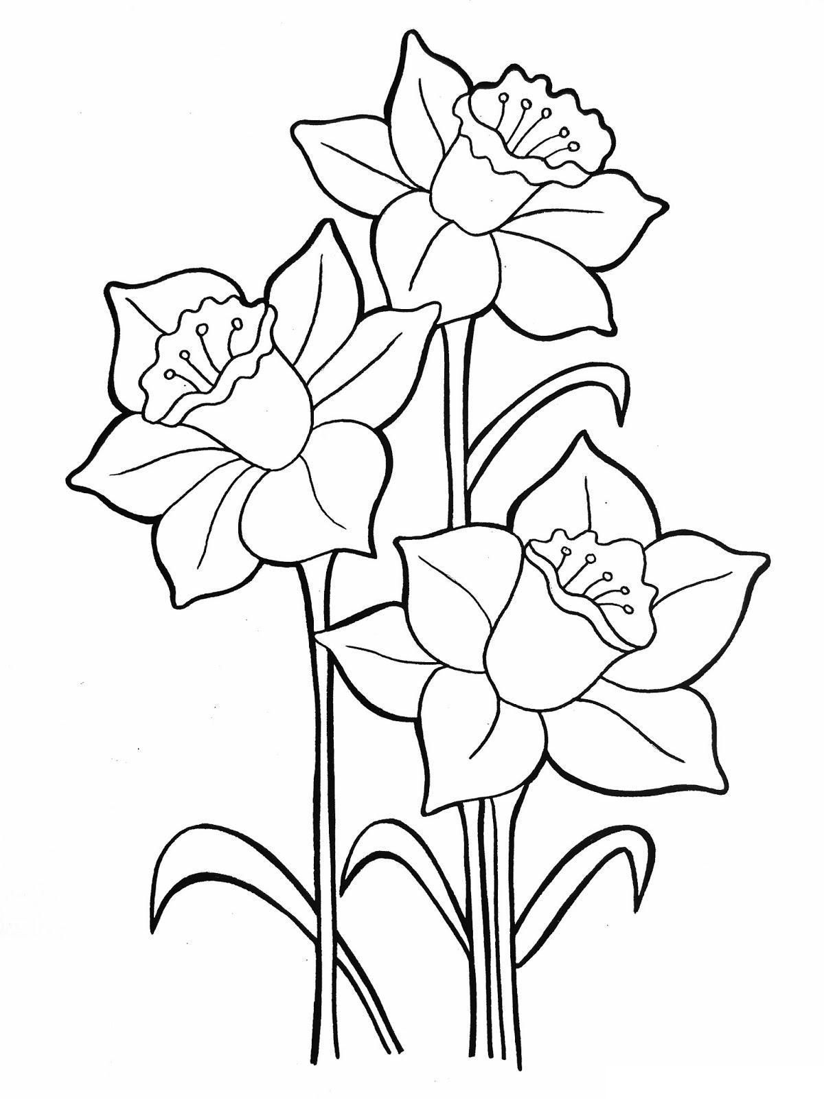 Три нарцисса Раскраски цветы хорошего качества