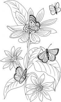 Цветы с бабочками цветы раскраски онлайн бесплатно