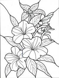 Цветы вьюнки цветы раскраски онлайн бесплатно