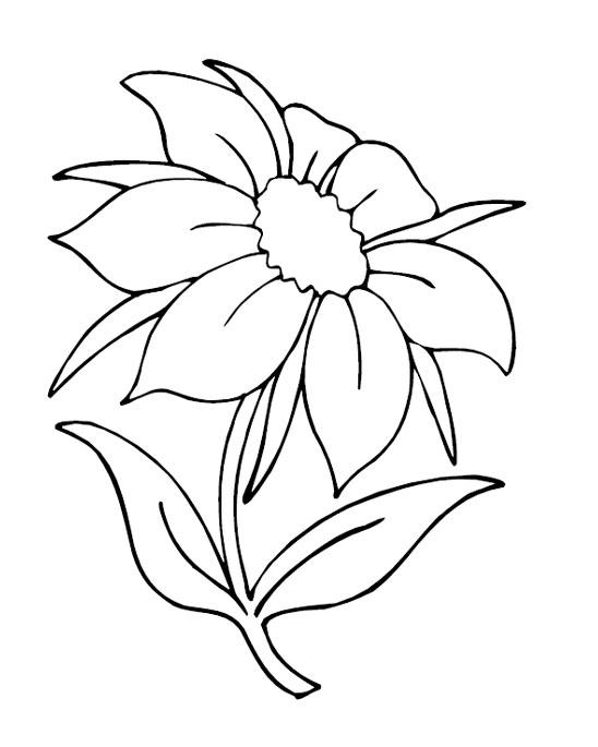 Красивый цветок цветы раскраски онлайн бесплатно