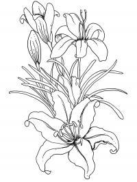 Лилии Разукрашки цветы