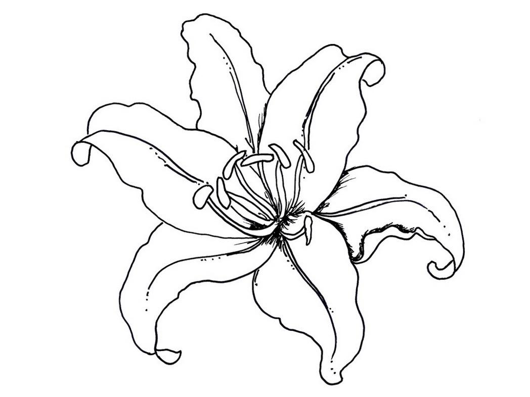 Цветок лилии Разукрашки цветы