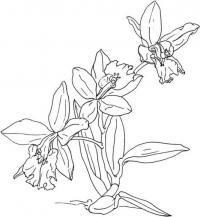 Поникшие цветы цветы раскраски онлайн бесплатно