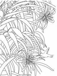 Раскраски антистресс, тигровые лилии с калибри Раскраски цветы хорошего качества