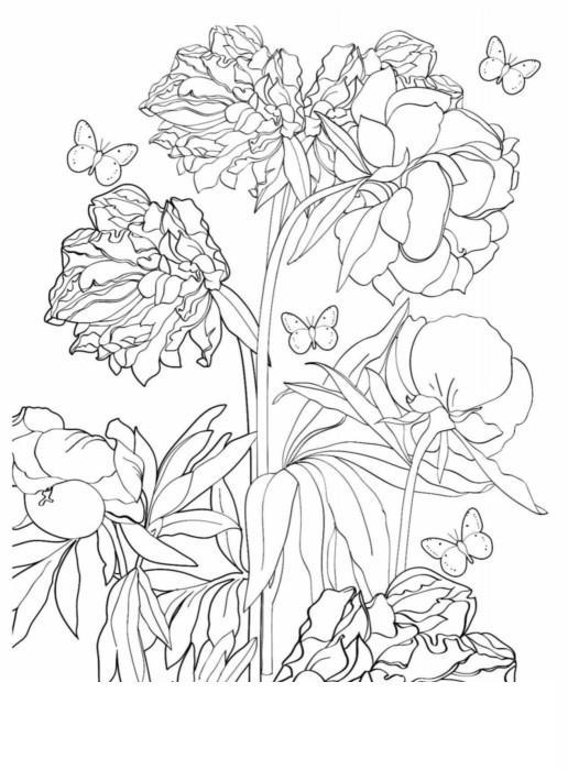 Раскраски антистресс  клумба Раскраски цветы хорошего качества