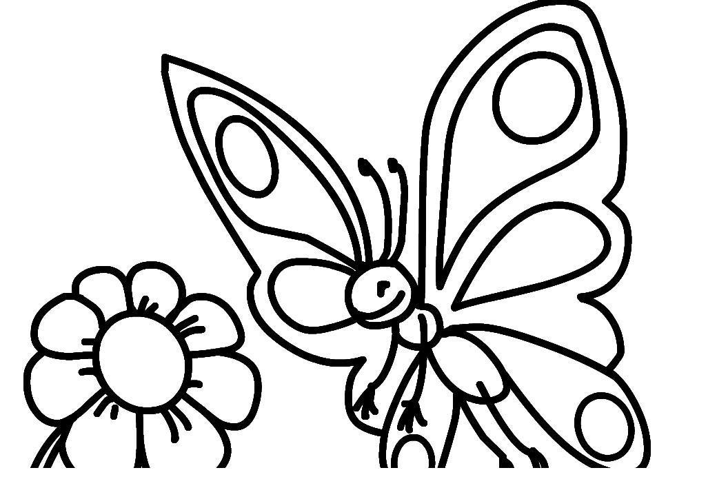 Для малышей бабочка на цветке Фото раскраски цветы