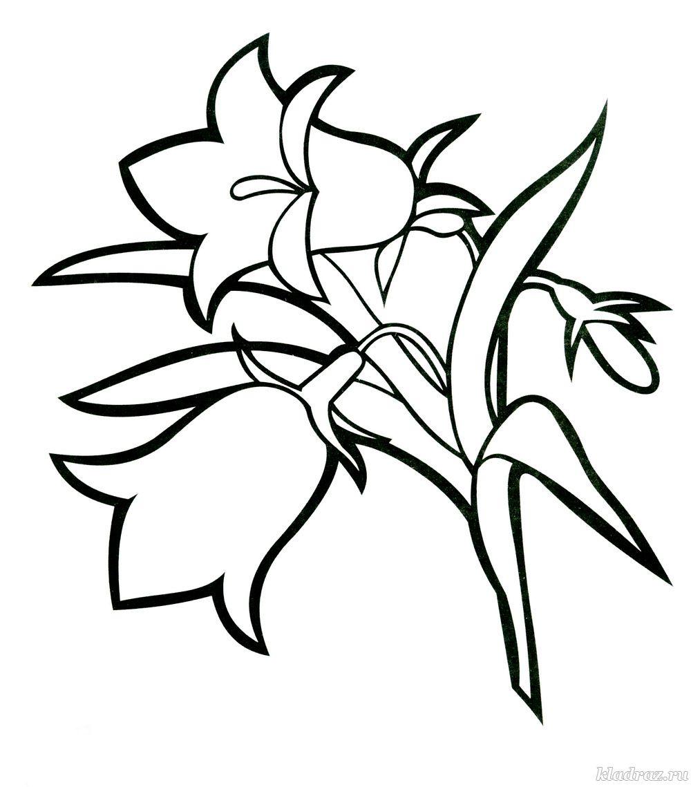 Для малышей колокольчики Фото раскраски цветы