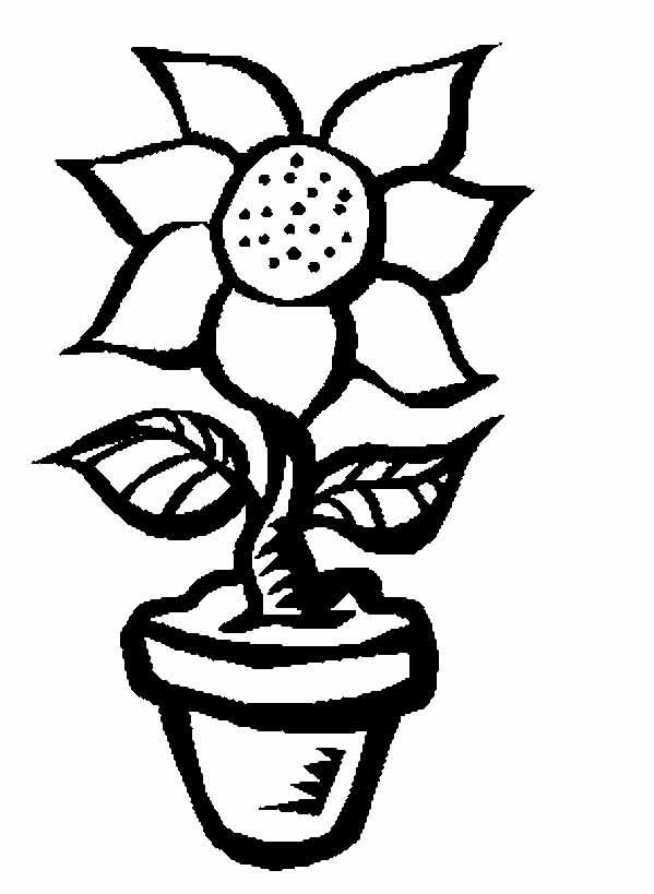 Для малышей подсолнух Фото раскраски цветы