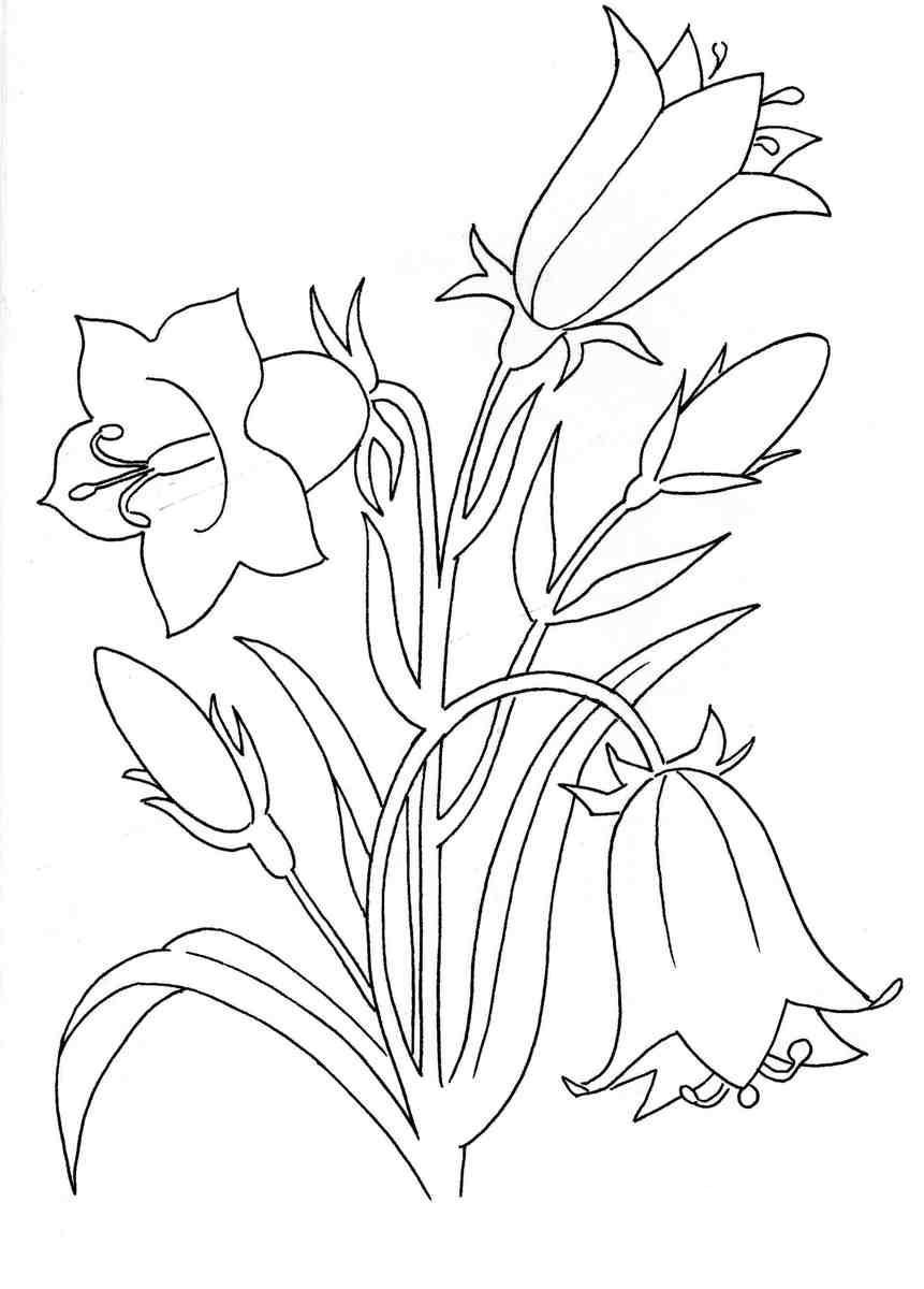 Цветок 5 лепестков Галерея раскрасок с цветами онлайн