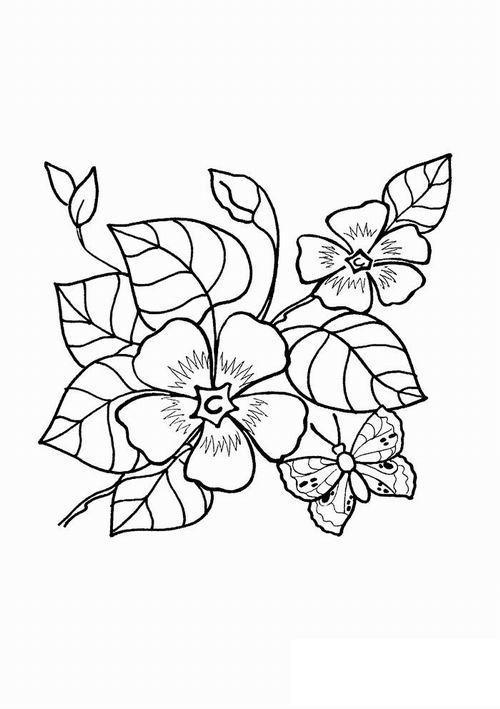 Цветок 5 лепестков с бабочкой Галерея раскрасок с цветами онлайн