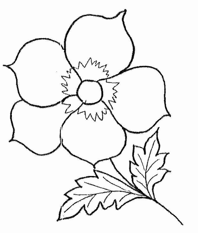 Цветочек Галерея раскрасок с цветами онлайн