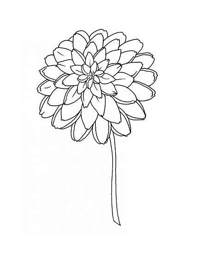 Раскраска цветка астры