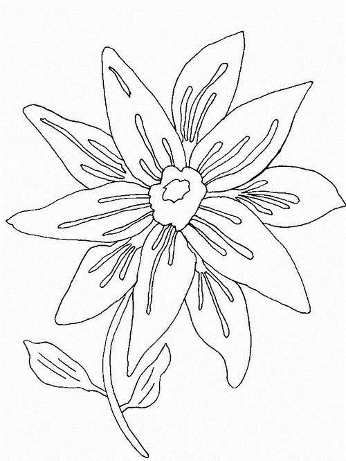 Цветок с лепестками в два яруса Раскраски цветы скачать