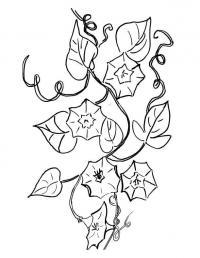 Вьюны цветы раскраски онлайн бесплатно