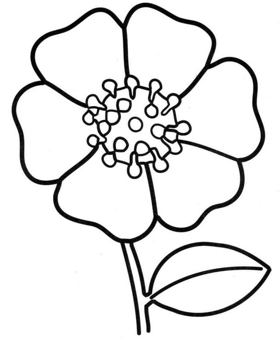 Мак Фото раскраски цветы