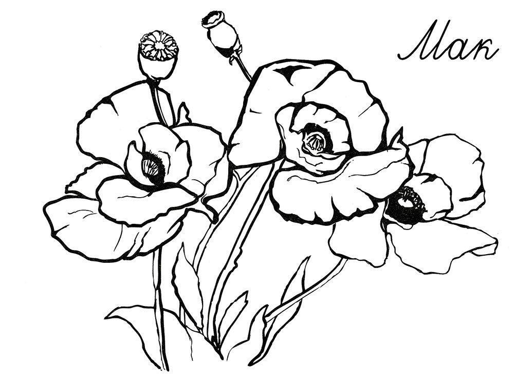 Цветущий мак Распечатываем раскраски цветы бесплатно