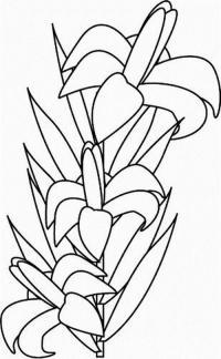 Экзотика цветок Раскраски цветы скачать