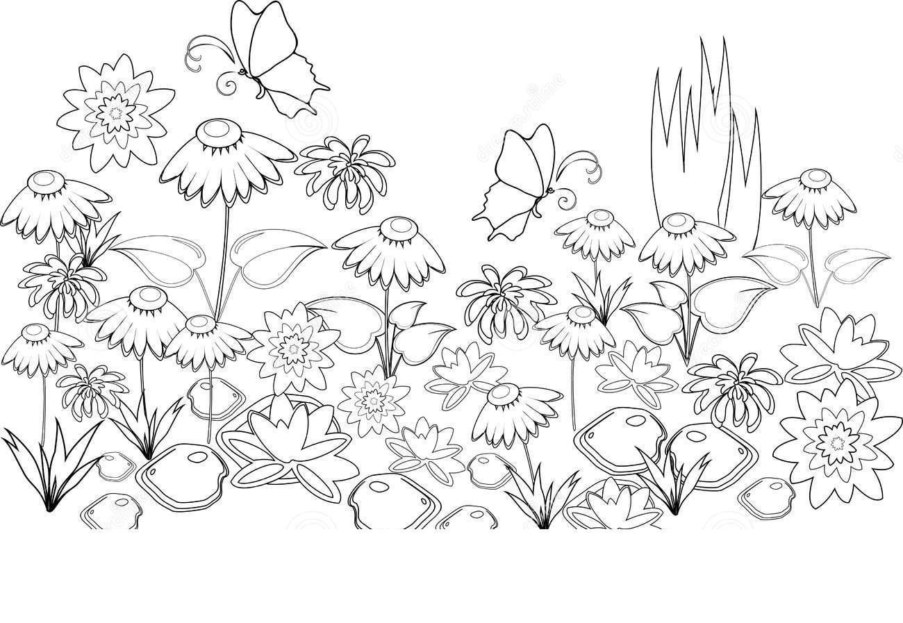 Поле цветов Раскраски цветы скачать