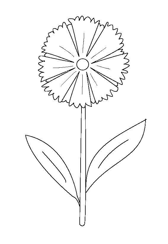 Цветок гортензия картинки 7