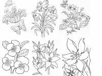 Лилии, фиалки, анютины глазки цветы раскраски онлайн бесплатно
