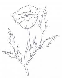 Простой мак Распечатываем раскраски цветы бесплатно