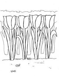 Поле тюльпанов Раскраски цветы скачать