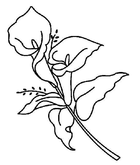 Каллы, белокрыльник Красивые раскраски цветов