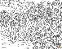 Поле цветов, поле ирисов Картинки раскраски цветы