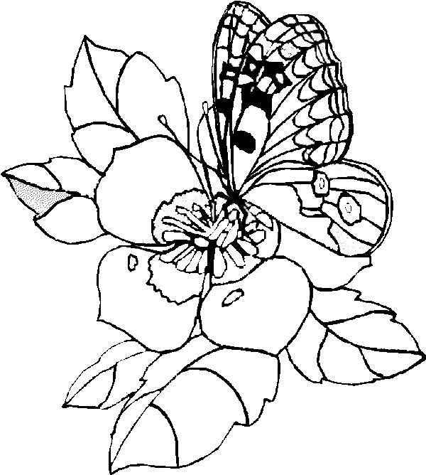 Бабочка на очень красивом цветке Раскраски цветы для детей