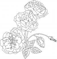 Красивые розы для узоров Раскраска цветок для скачивания